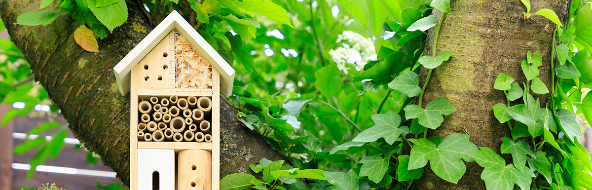 Read more about Build a Bug Hotel to Bring Pollinators to Your Yard