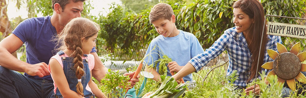 Read more about Home Vegetable Gardening for Dummies: COVID-19 Edition