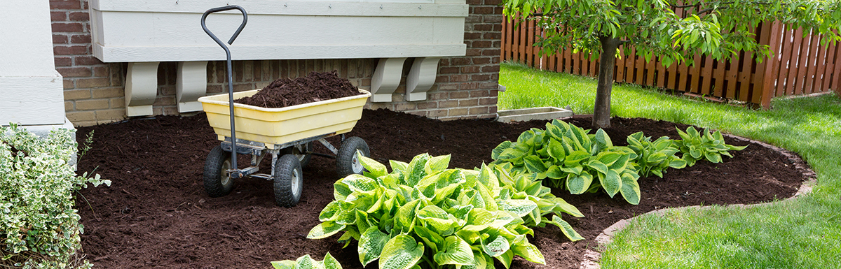 Read more about Landscaping for Mosquitoes: Repel Them the Natural Way