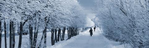 People walk through snowy woods